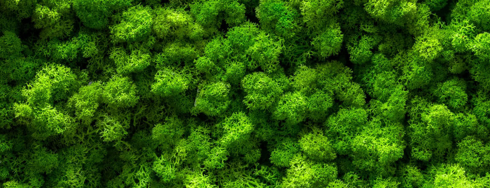 Un zoom sur un mur végétalisé