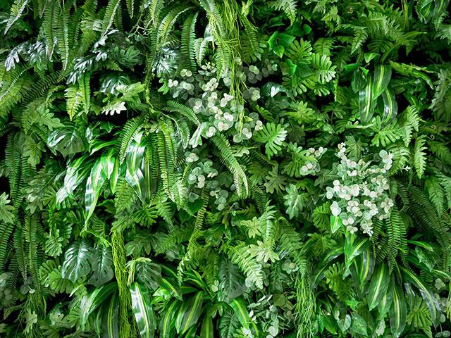 Gros plan sur un mur végétal où on voit un foisonnement de feuilles des plantes différentes.